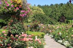 Цветене в парке Стоковые Фотографии RF