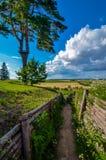 Цветене дерева полностью вдоль следа фермы через поля рапса, ландшафт весны в теплом свете заходящего солнца Стоковые Фотографии RF