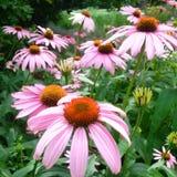 Цветене лета Стоковое Фото