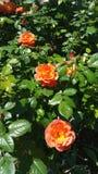 Цветене лет стоковая фотография rf