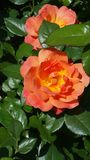 Цветене лет стоковые изображения rf