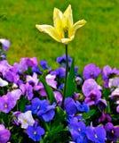 Цветене над остатками Стоковое Изображение