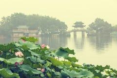 Цветене лотоса озера Ханчжоу западное полностью в туманном утре стоковое фото rf