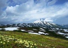 Цветене рододендронов Стоковое Фото