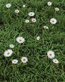 цветене цветет весна бесплатная иллюстрация
