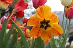 цветене цветет вполне стоковое фото rf