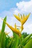 цветене цветет рай Стоковые Фото