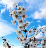 Цветене цветка лета полностью Стоковое Изображение RF