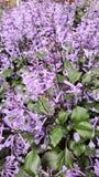 Цветене цветка на зоре Стоковое Изображение