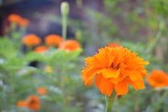 Цветене цветка Стоковое фото RF