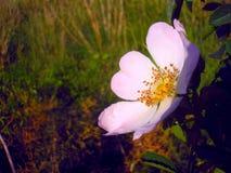 Цветене цветка Стоковые Изображения RF
