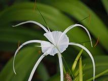 Цветене 4 цветков в саде Стоковые Изображения RF