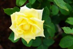 Цветене цветков Стоковые Изображения