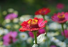 цветене Стоковое Изображение RF