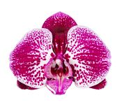 Цветене Стоковое Фото