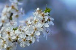 Цветене Стоковое Изображение