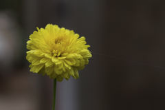 Цветене Стоковое фото RF