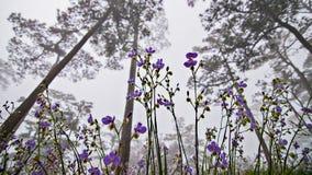 Цветене стоковые фото