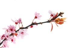 цветене Стоковые Изображения
