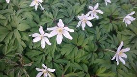 Цветене Wildflowers полностью Стоковые Фотографии RF