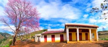 Цветение абрикоса вишневого дерева рядом с древним храмом 100 лет Стоковые Фото