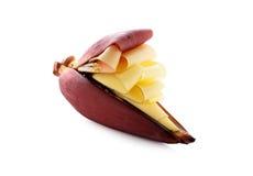 Цветение банана на белизне Стоковая Фотография