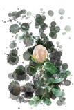 Цветение бежевого белого отверстия розовое - сад цветет зацветать в лете, акварель брызгает дизайн стоковые фотографии rf