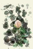 Цветение бежевого белого отверстия розовое - сад цветет зацветать в лете, акварель брызгает дизайн стоковое фото rf