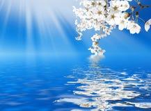 Цветение весной Стоковые Изображения