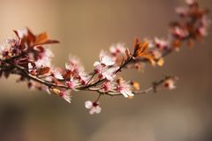 Цветение весны в парках моего городка с из предпосылкой фокуса стоковое фото