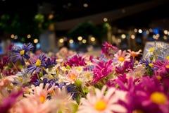 Цветение весны с bokeh на темной предпосылке Стоковое Изображение