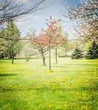 Цветение весны фруктовых дерев дерев садовничает или паркует стоковое фото rf