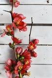 Цветение весны Стоковое Изображение