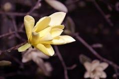 Цветение весны Стоковое фото RF