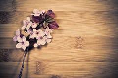 Цветение весны стоковые фотографии rf