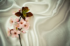 Цветение весны стоковое изображение rf