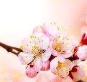 Цветение весны Стоковая Фотография RF