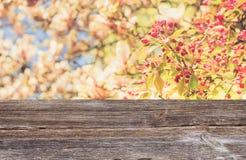Цветение вишневого дерева Стоковые Фото
