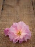 Цветение вишни весны на деревенской древесине Стоковые Изображения RF