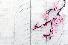 Цветение вишни Розовые цветки Сакуры Весна или концепция дня мам Стоковая Фотография RF