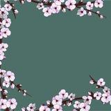 Цветение вишни Цветки Sakura вектор детального чертежа предпосылки флористический Стоковая Фотография