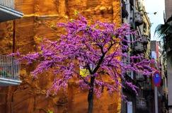 Цветение в улице, Испания дерева Judas Стоковые Изображения