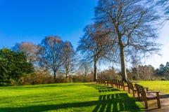 Цветение дерева с стендами в ботанических садах против голубого неба, Стоковая Фотография