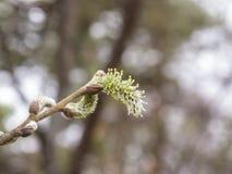 Цветение дерева Стоковое Фото