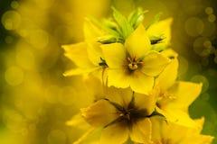 Цветение желтых цветков Стоковая Фотография RF