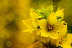 Цветение желтых цветков Стоковое Фото