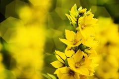 Цветение желтых цветков Стоковые Фотографии RF