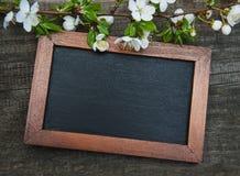Цветение и классн классный вишен весны Стоковое фото RF