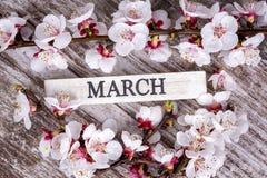 Цветение и марш дерева абрикоса пишут на деревянной предпосылке стоковые изображения rf