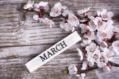 Цветение и марш дерева абрикоса пишут на деревянной предпосылке стоковое фото